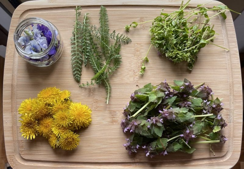 Violets, yarrow, chickweed, dandelions, and purple nettle on cutting board