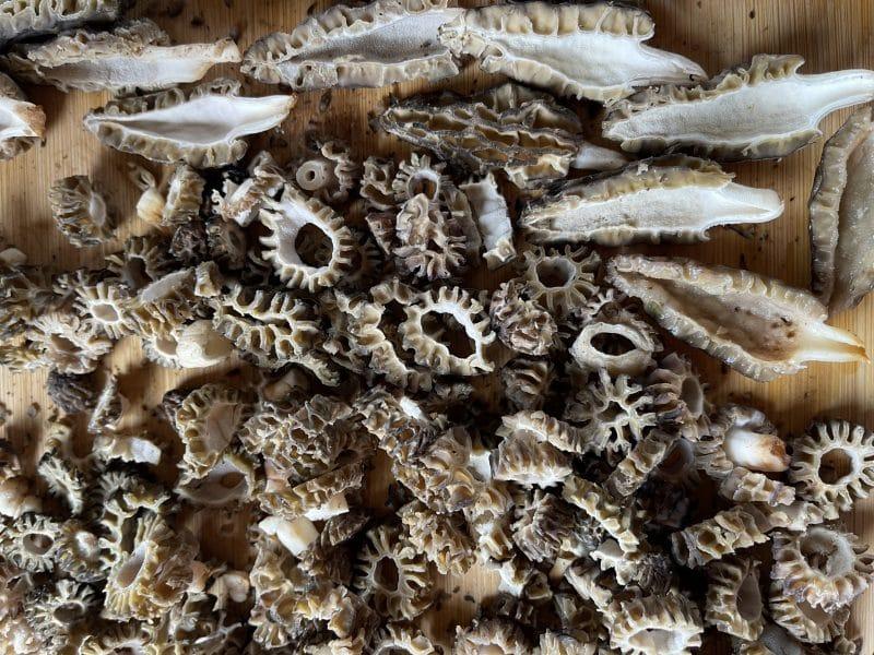 Morel mushrooms cut in half